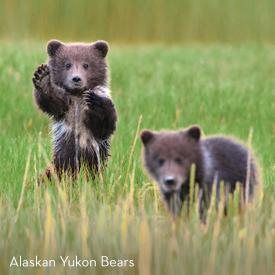 Great Alaskan