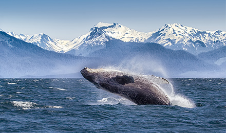 The Ultimate Alaska Cruise